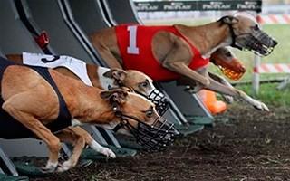 Собачьи бега ставки онлайн футбол ставки и советы